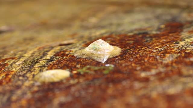 vídeos de stock e filmes b-roll de seashells living on a rock - concha do mar