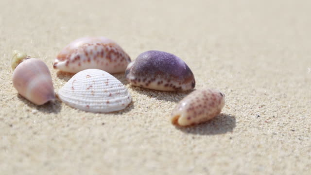 stockvideo's en b-roll-footage met seashells on a beach - vijf dingen