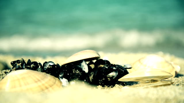 vídeos de stock e filmes b-roll de seashells - concha do mar