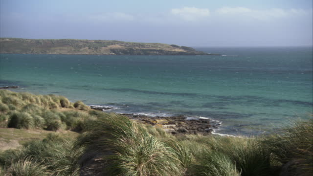 ws, pan, seashore, carcass island, falkland islands - falkland islands stock videos and b-roll footage