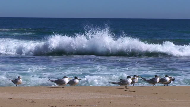 Seashore with waves and with gulls
