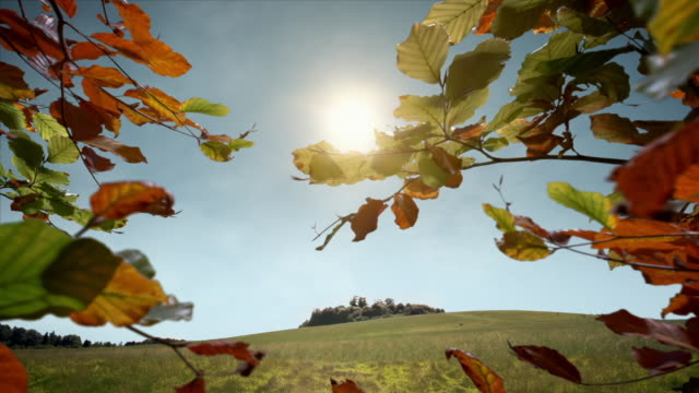 season changes from summer to autumn in countryside scene - bare tree stock videos & royalty-free footage