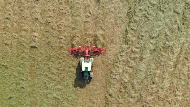 saison der heuernte - cereal plant stock-videos und b-roll-filmmaterial
