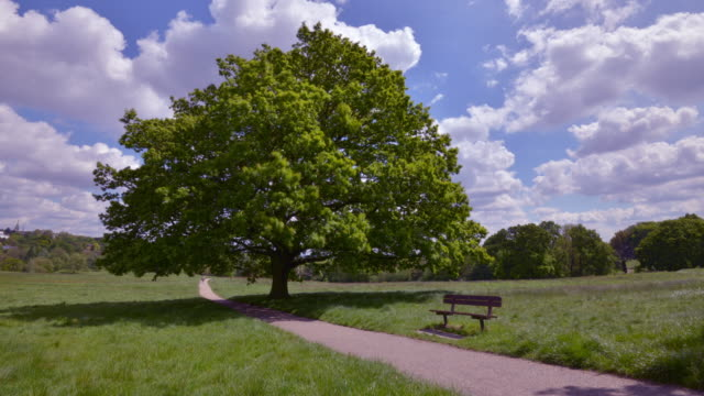 seasonal change of a large english oak tree - meteorologie stock-videos und b-roll-filmmaterial