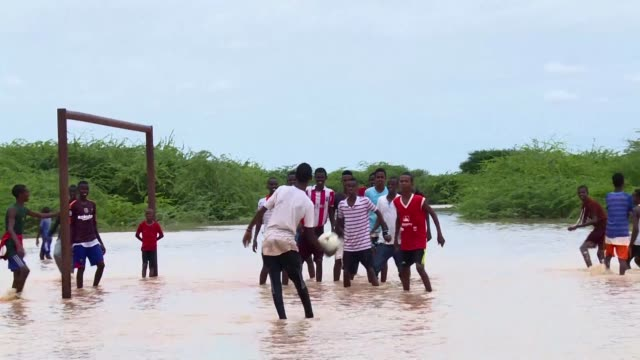 seasonal rains bring diseases such as cholera and malaria to kenya's dadaab refugee camp housing 235000 mainly somali refugees as well as... - microscopic animal stock videos and b-roll footage