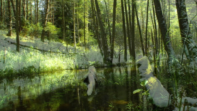 seasons on the forest - le quattro stagioni video stock e b–roll