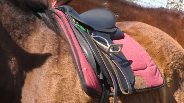 A seat on the back of a horse