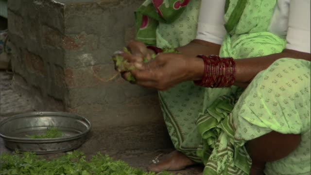 MS TU Seated woman plucking leaves of herbs from stems, Pune, Maharashtra, India
