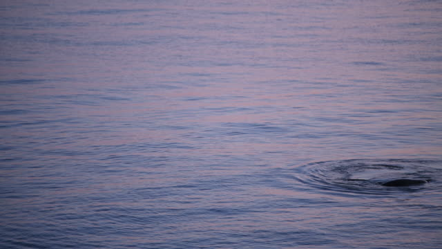seattle harbor seal - harbour seal stock videos & royalty-free footage
