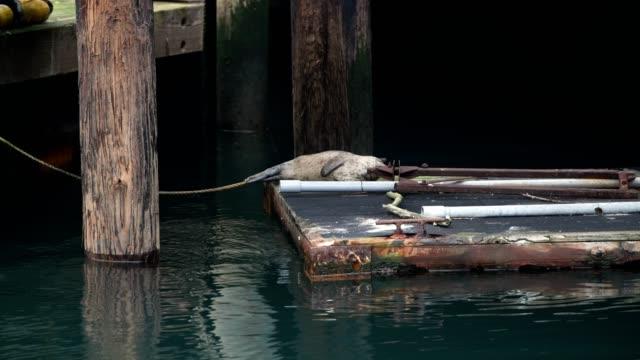 vídeos y material grabado en eventos de stock de seattle wildlife - bahía de elliott