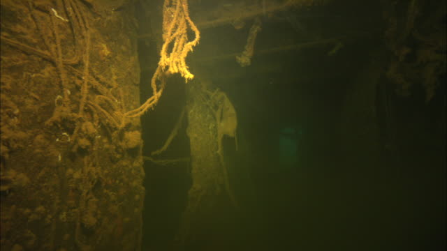 stockvideo's en b-roll-footage met seaweed and other marine vegetation clings to the interior of a shipwreck on the palau reef. - scheepswrak