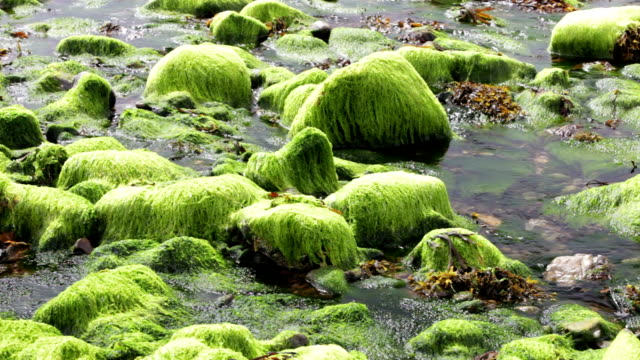 Seaweed at low tide