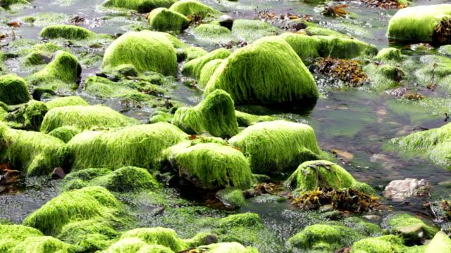 seaweed at low tide - insel skye stock-videos und b-roll-filmmaterial