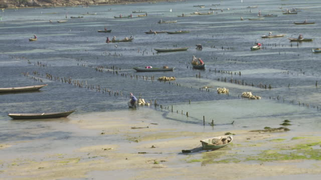 MS Seaweed farming in sea / Nusa Lembongan, Klungkung, Indonesia