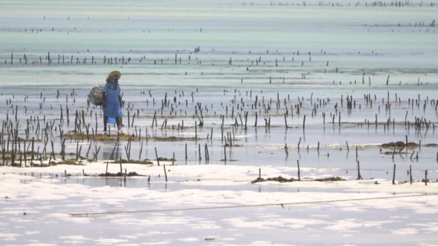 seaweed farming - seaweed stock videos & royalty-free footage
