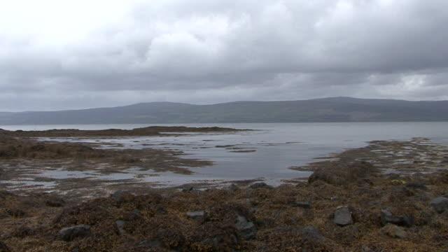 vídeos y material grabado en eventos de stock de algas flotante junto a la costa - isla de mull