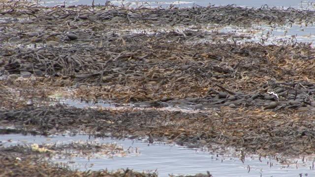 seetang floating auf das meer - mull stock-videos und b-roll-filmmaterial