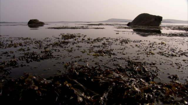 vidéos et rushes de seaweed floats in the water off the coast of tresco, uk. available in hd. - varech