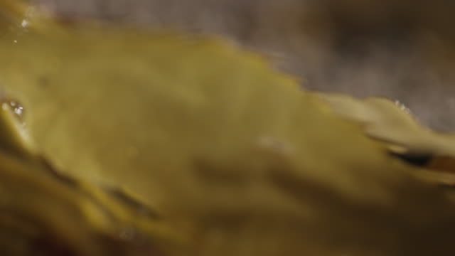 seaweed on beach, extreme close up - aquatic organism stock videos & royalty-free footage