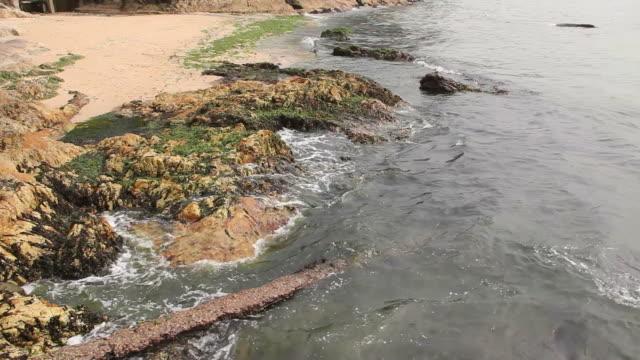 Seaweed on the beach.