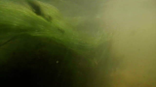 seaweed - tide stock videos & royalty-free footage