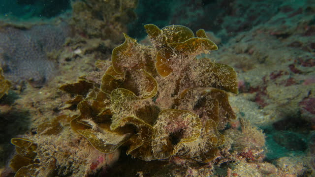 seaweed - subtropical climate stock videos and b-roll footage