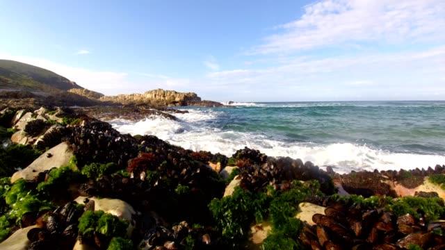 海辺の岩場の海藻とムール貝 - ムール貝点の映像素材/bロール