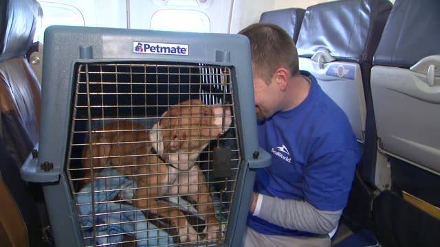 stockvideo's en b-roll-footage met seaworld rescue team members and southwest employees at sixty hurricane sandy pets take charter flight to new holiday home at newark liberty... - new jersey