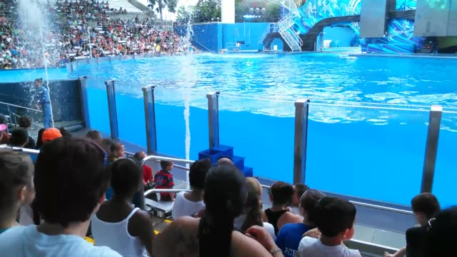 """seaworld said thursday that the killer whales currently residing at its parks are """"the last generation"""" and will not be replaced. video of orca... - killer whale stock videos & royalty-free footage"""