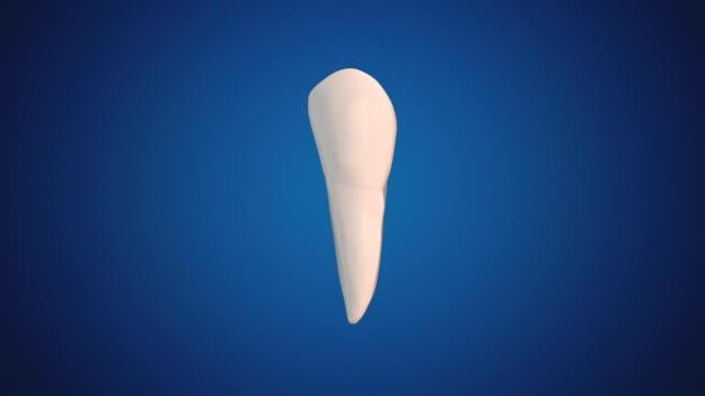 second premolar / bicuspid - bicuspid stock videos & royalty-free footage