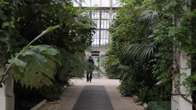 secret world of plants at kew gardens on may 6, 2021 in london, england. sound exhibition in the temperate house. - concepts stock videos & royalty-free footage