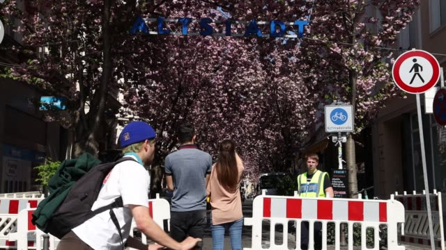 security staff of the city of bonn gives security advices to pedestrians in the streets of the blooming cherry blossom and cherry blossom trees at... - cherry blossom stock videos & royalty-free footage