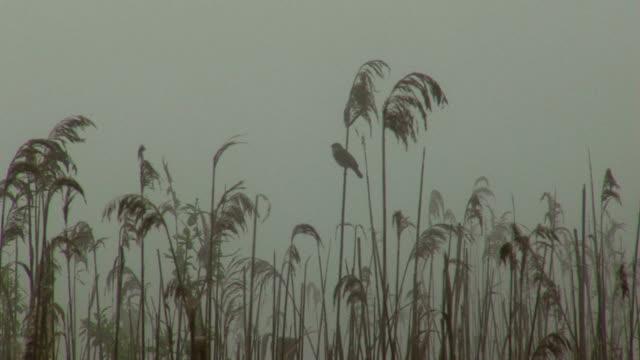 sedge warbler. fog - warbler stock videos & royalty-free footage