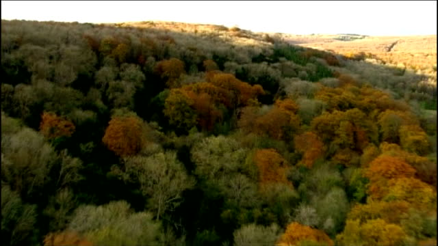 seed bank to help protect trees in uk; t09111203 / tx 9.11.2012 england: sussex: south downs: ext air view / aerial mixed woodland on hillside with... - サウスダウンズ点の映像素材/bロール