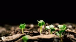 Seed Growing Time Lapse Black Background Macro