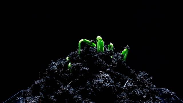 スマート フォン時間 lapse.save 性質の概念に成長している苗 - 種点の映像素材/bロール