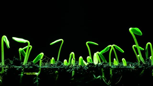 seedling growing time lapse