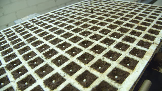 seedling tray in a production line at a modern greenhouse - seed stock videos & royalty-free footage