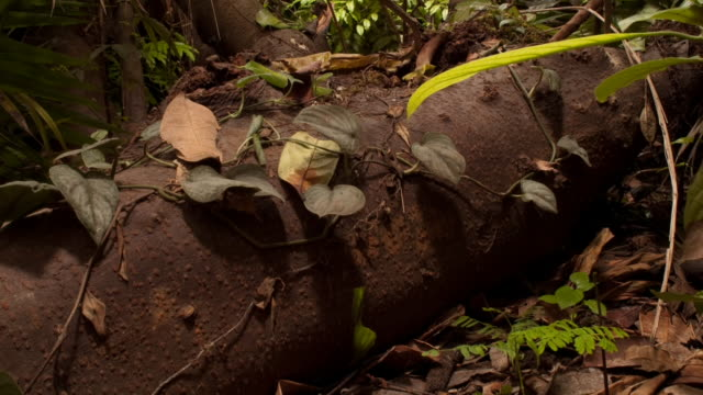 seedlings grow near the thick roots of a tree. available in hd. - root stock videos and b-roll footage