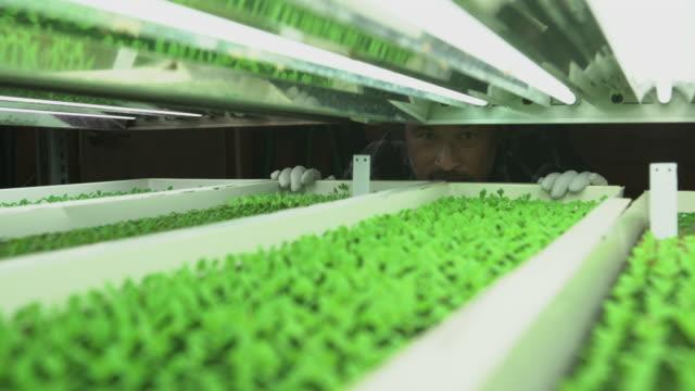ecu seedlings growing under led lights - 生物学点の映像素材/bロール