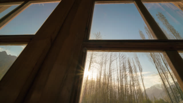 seen through the window at sunrise - snowy owl stock videos and b-roll footage