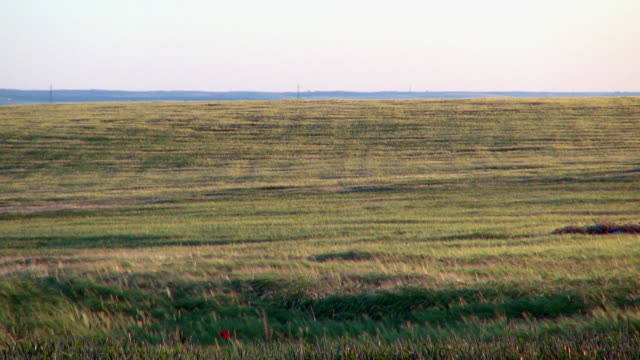Segovia Spain Grasslands with Wind Gently Blowing