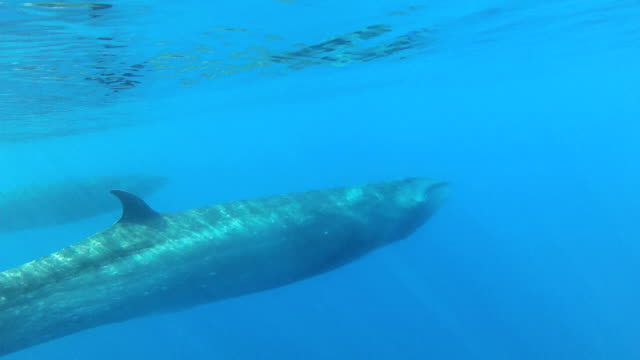 sei whale - sperm whale stock videos & royalty-free footage