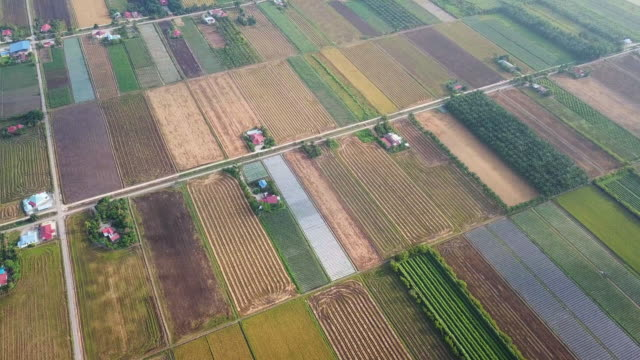 sekinchan padi field in the morning with fog - independence stock videos & royalty-free footage