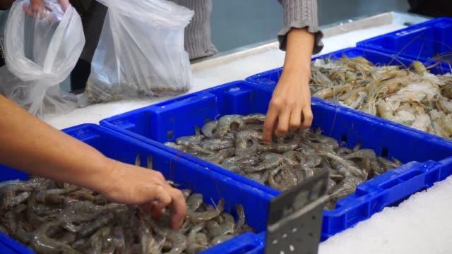 select shrimp in market - prawn stock videos & royalty-free footage