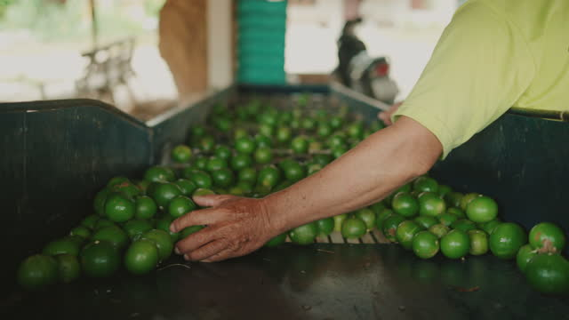 selection of agricultural products - citrus fruit stock videos & royalty-free footage