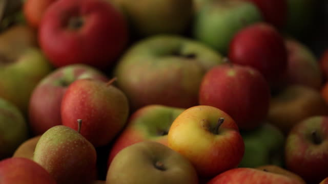 CU PAN Selection of different apples / London, UK