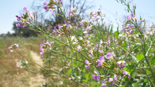 selective focus of a plant on a hiking trail. - slow motion - palos verdes stock videos & royalty-free footage