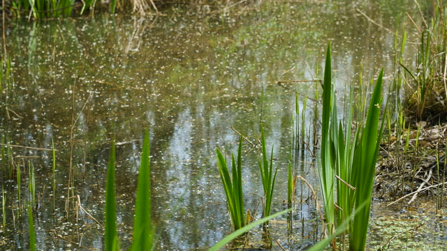Selective focus of pond with grasses