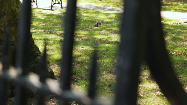selective focus squirrel in park - railings stock videos & royalty-free footage
